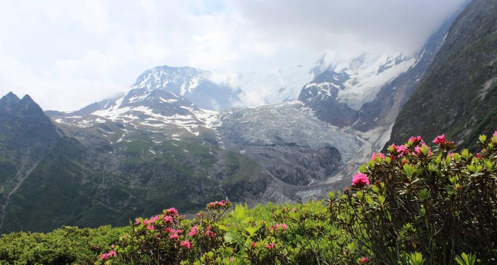 flore / paysage à Chamonix, Mont-Blanc