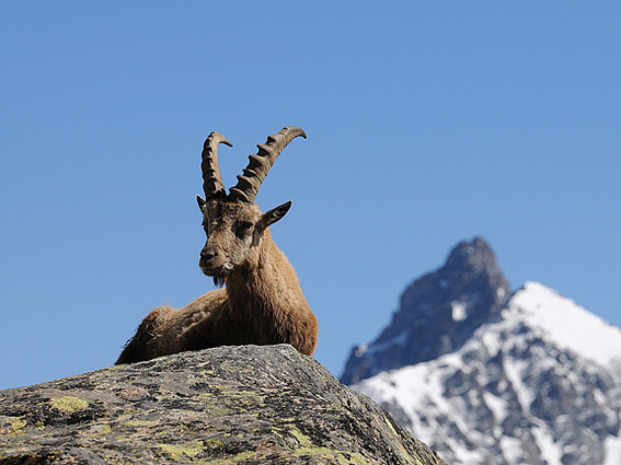 chamonix sightseeing nature and wildlife