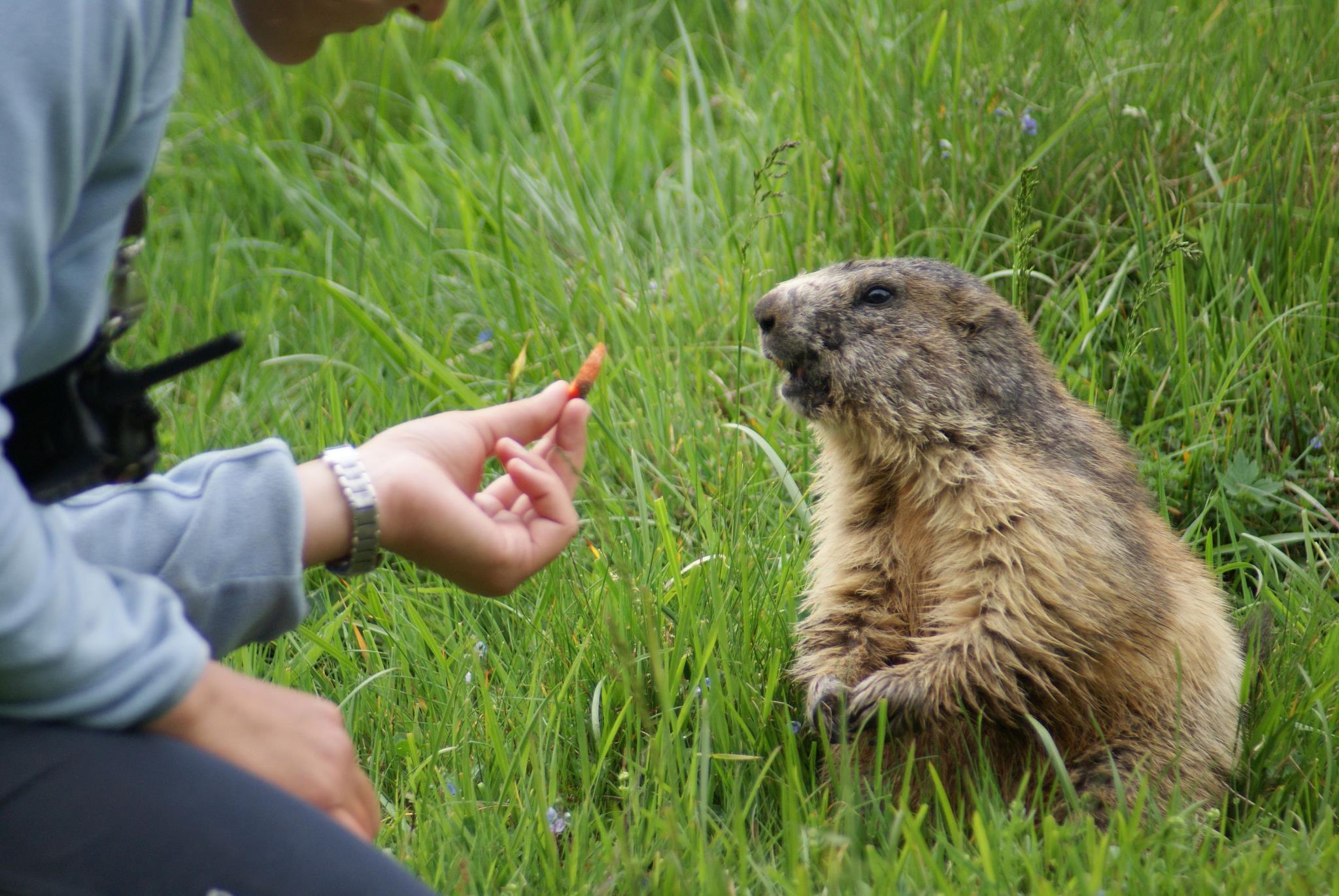 The Merlet Animal Park in Les Houches   Chamonix net