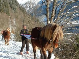 Ski Joering in Les Houches