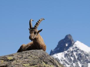 Chamonix Nature & Wildlife