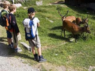 Merlet Animal Park